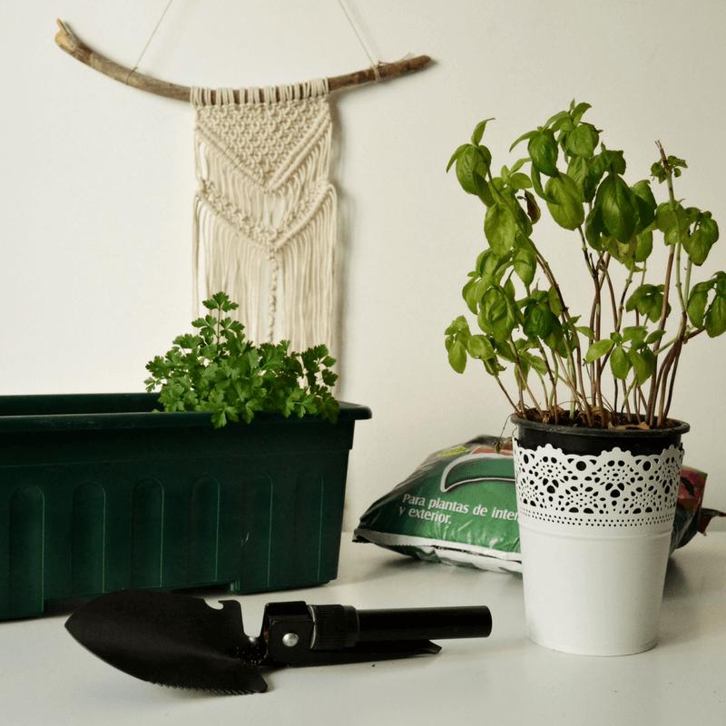 Na senda da sustentabilidade – Plantas