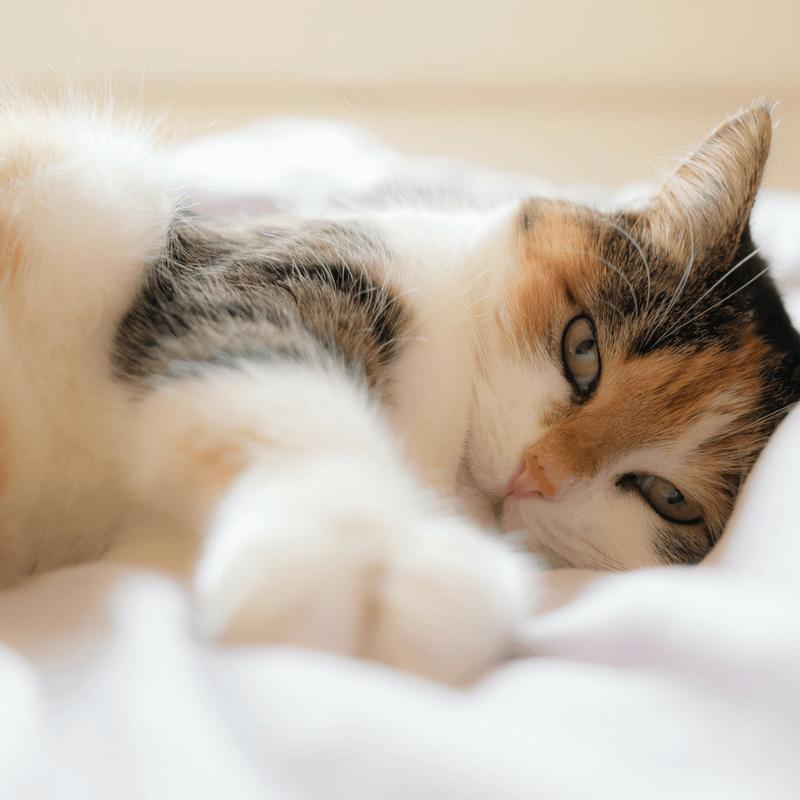 Gatos em casa?