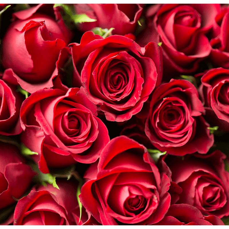 Gosto de… Rosas Vermelhas (e brancas)