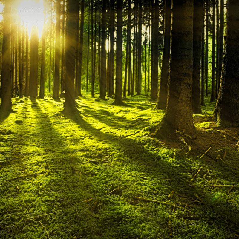 osto de florestas, de aglomerados de árvores, de flores selvagens, de terra e de cogumelos. Gosto do seu aroma, dos sons dos pássaros livres, do toque das cascas rugosas, envelhecidas pela chuva e pelo sol. Gosto de sentir o sol a espreitar entre as copas das árvores e do vento a sibilar através dos meus cabelos.