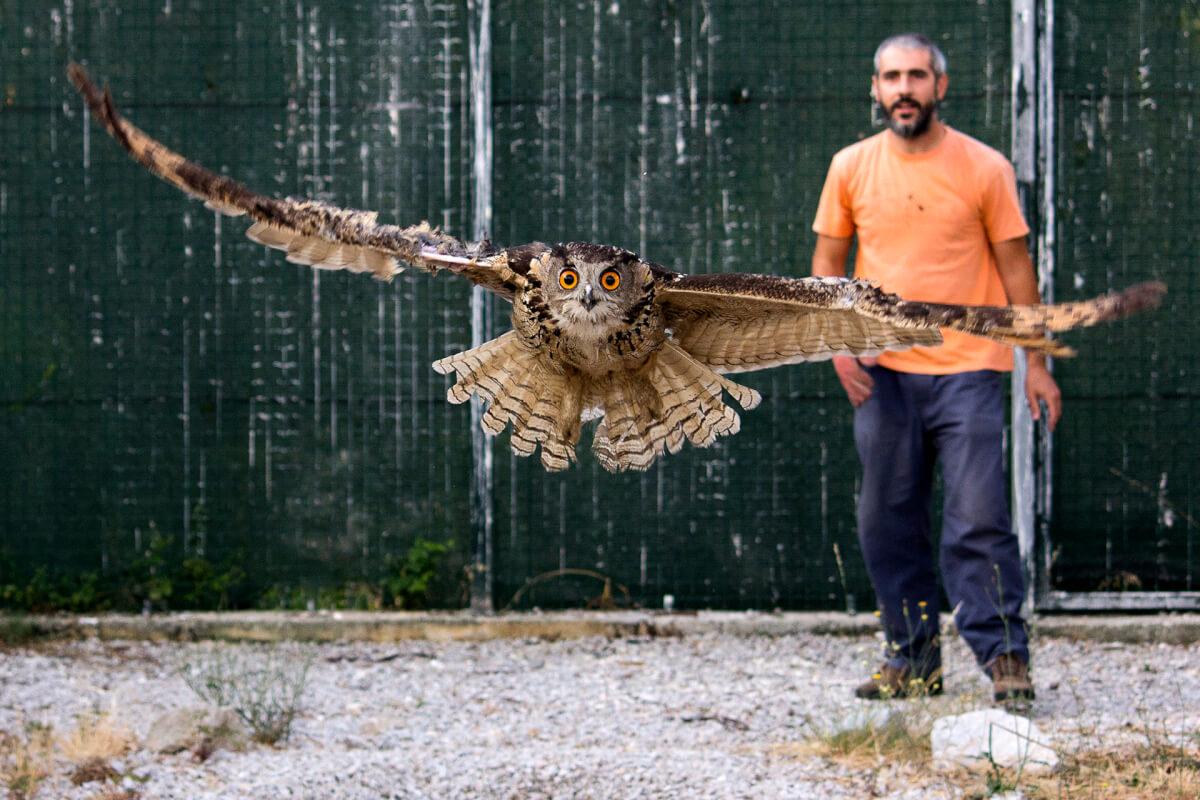 Centro de Ecologia, Recuperação e Vigilância de Animais Selvagens (CERVAS)
